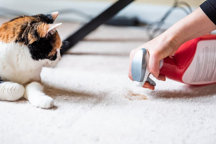 Unique Carpeting Cleansing Solutions Currently Offered Online